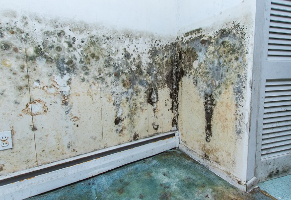 Mold growing across the wall